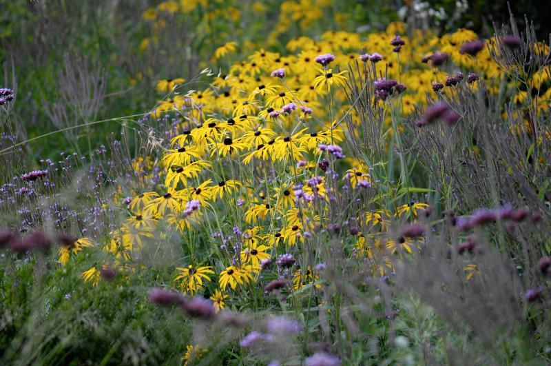 Vaste Planten Tuin : Combineren met vaste planten in de border u2013 tuinenstruinen.org