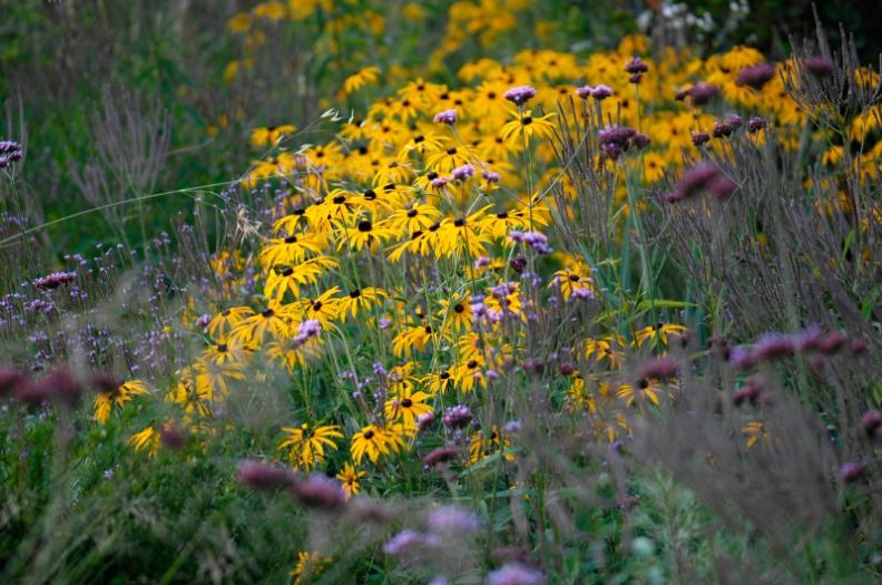 garden : Peter Janke D