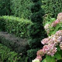 Een mooie haag is de trots van elke tuinliefhebber