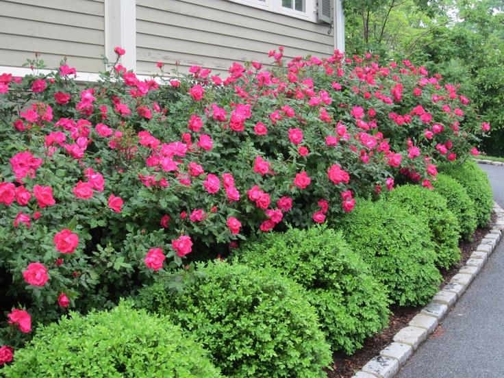 Een mooie haag is de trots van elke tuinliefhebber.