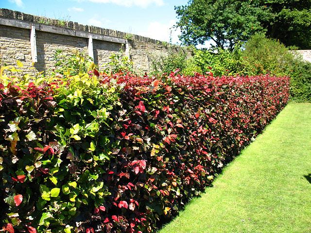 mixed hedge