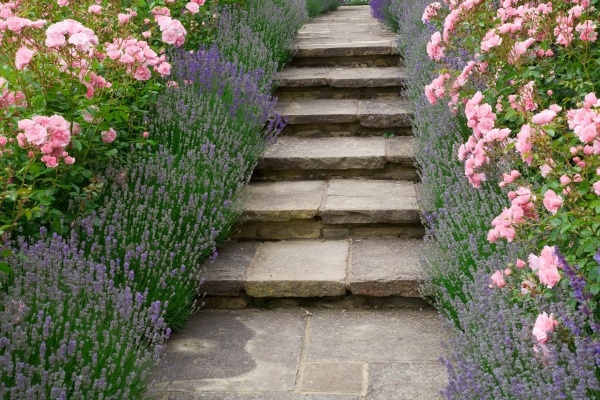 Combinatie van rozen met lavendel.