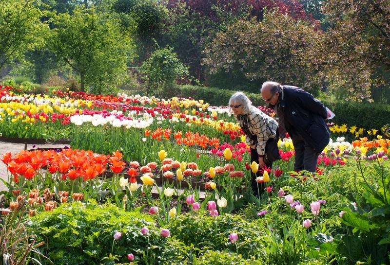 cambo-tulip-festival-43