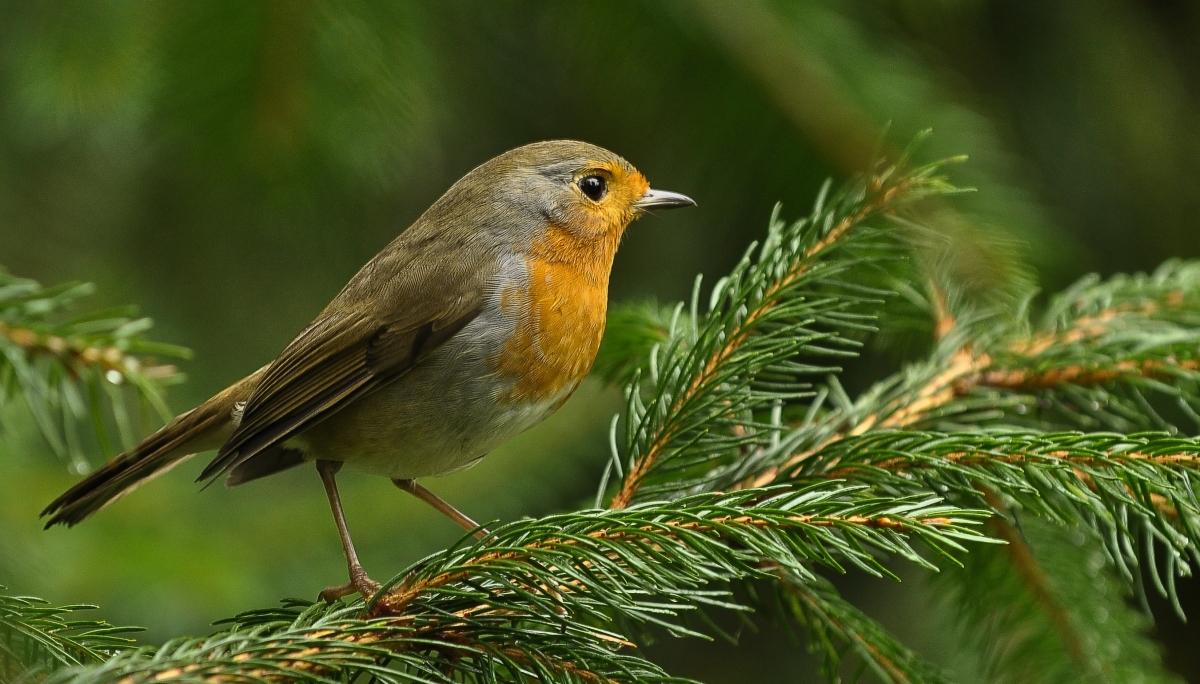 GO WILD! Tien tips om de biodiversiteit in uw tuin een boost te geven!