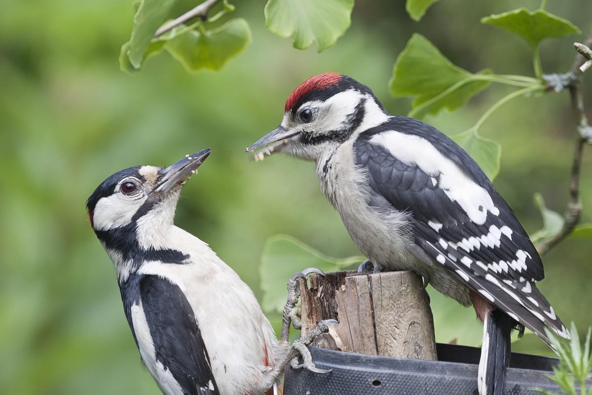 Maak uw tuin zo vogelvriendelijk mogelijk
