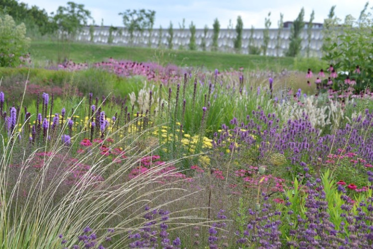 Vlinderhof 22 juli 2015 (60) (Kopie) (1)
