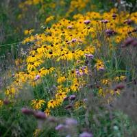 Borderplan - De vele kanten van vaste planten