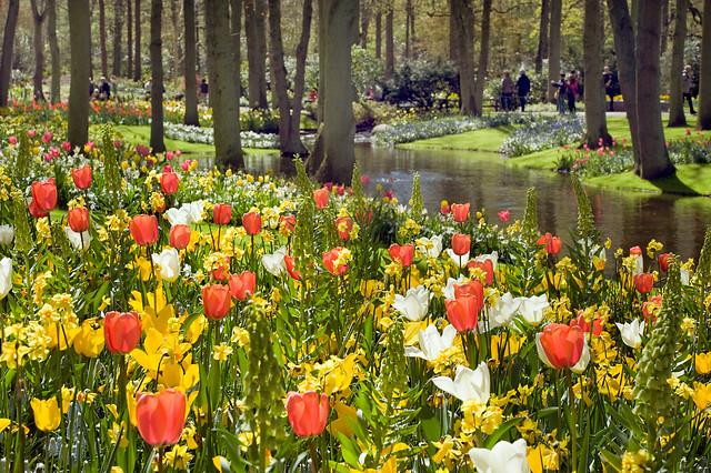 Tulipa; Narcissus; Freesia; Fritillaria