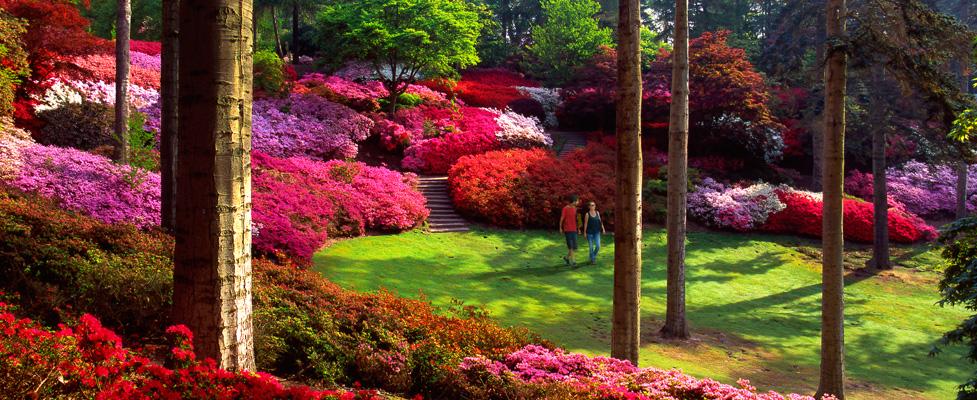 De 10 fraaiste Woodland Gardens van Groot Brittanië op een rij
