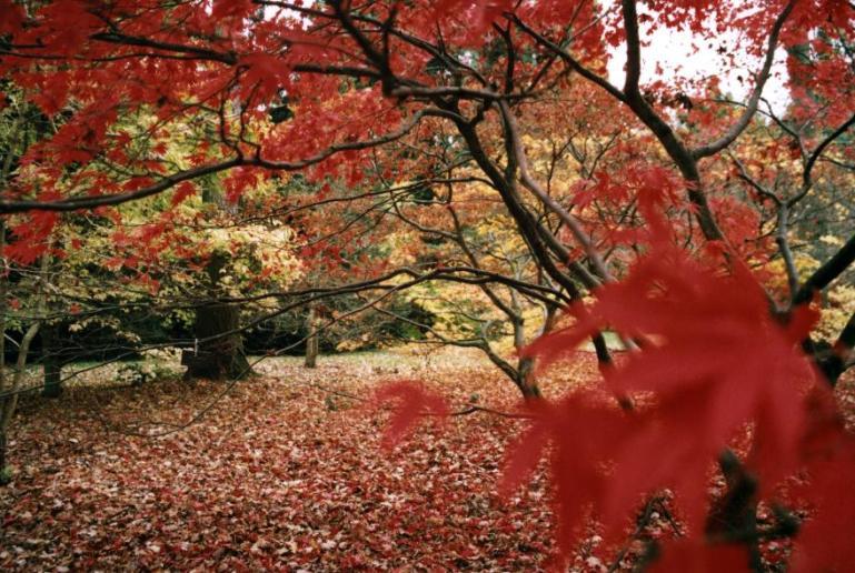 Westonbirt_Arboretum_1_(1)