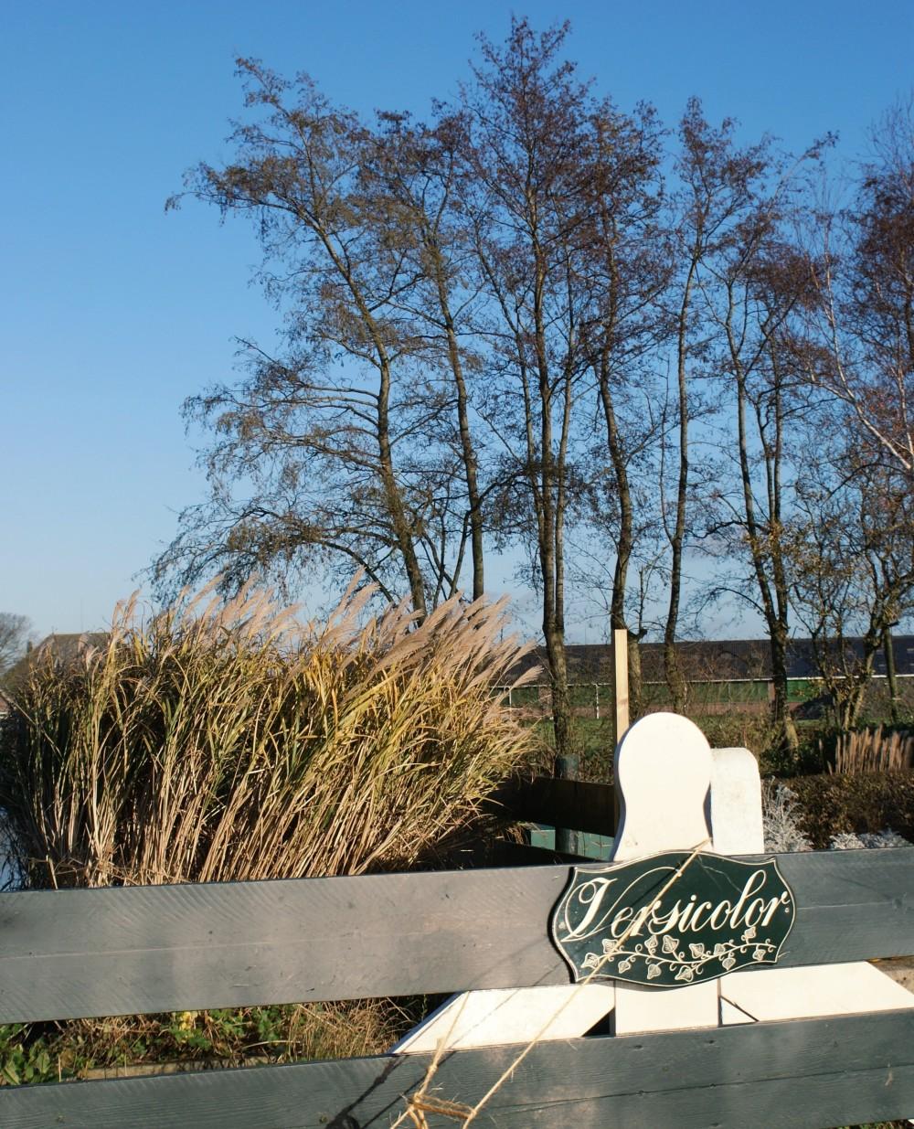 Marianne Greiner (Versicolor Tuin): De bruine tuin ...