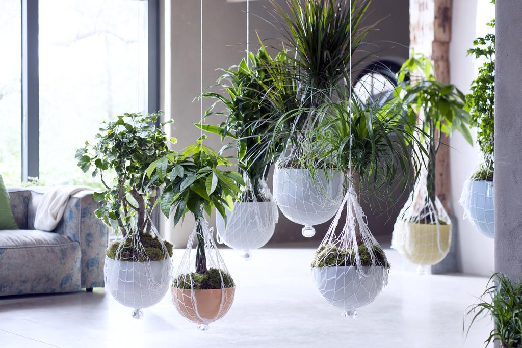 Kamerbomen zijn de Woonplanten van nu!