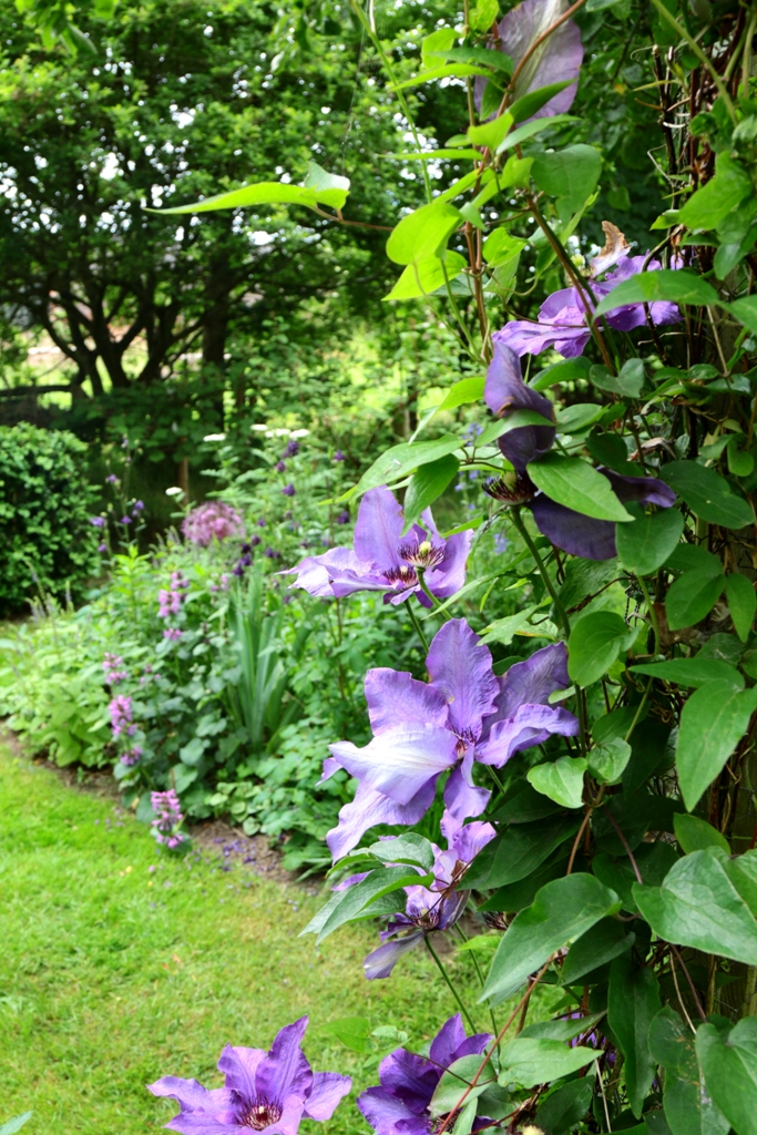 WWR Ploatje clematis © Cora Westerink