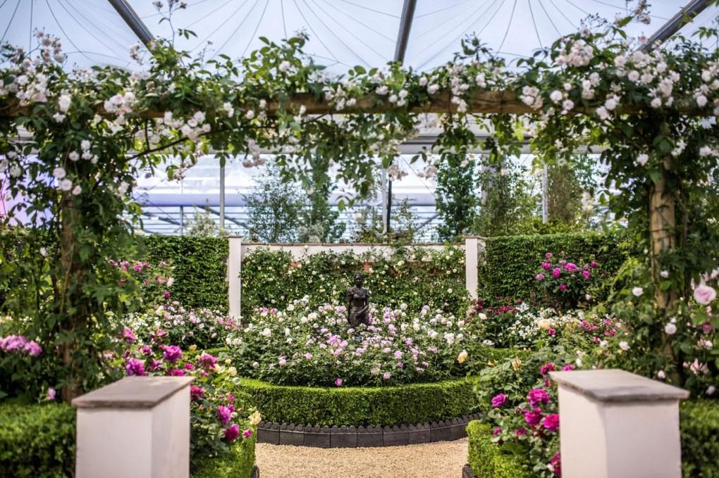 De stand van David Austin Rozen op de RHS Chelsea Flower Show 2016