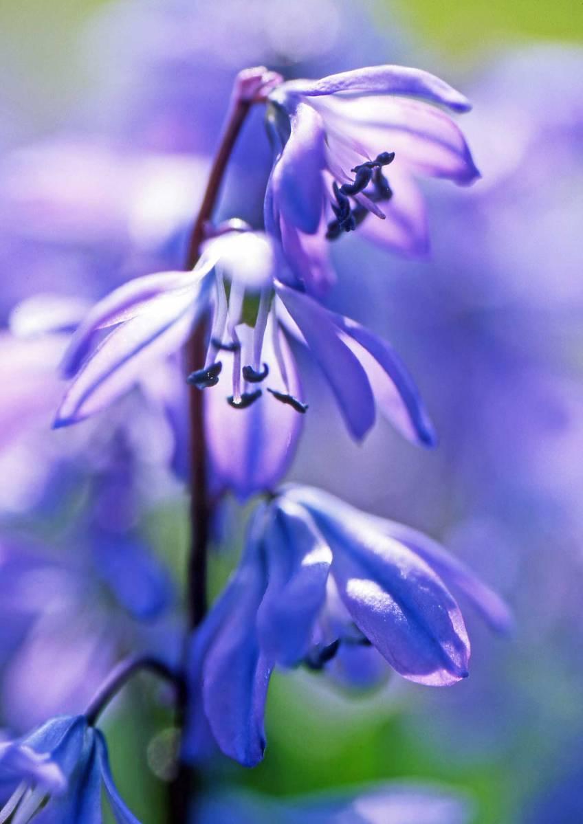 Gert Tabak's Tuinige Zaken Vertederende blauwtjes