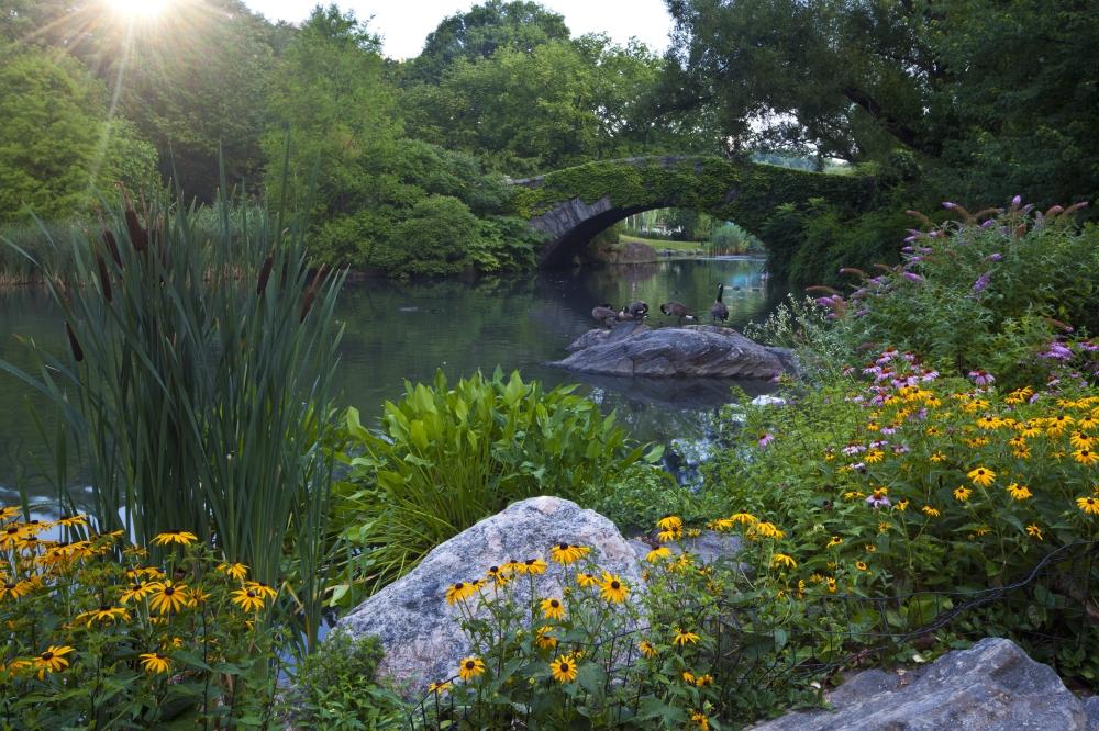 frederick olmsted central park pdf