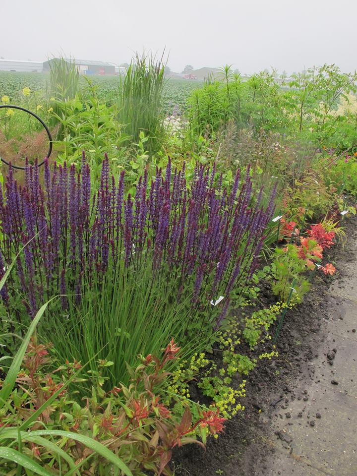 Tuinontwerper Marianne Greiner van Versicolor tuin