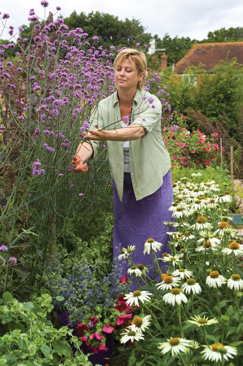Planten Voor Bijen.Go Wild Top 10 Vaste Planten Voor Bijen En Vlinders