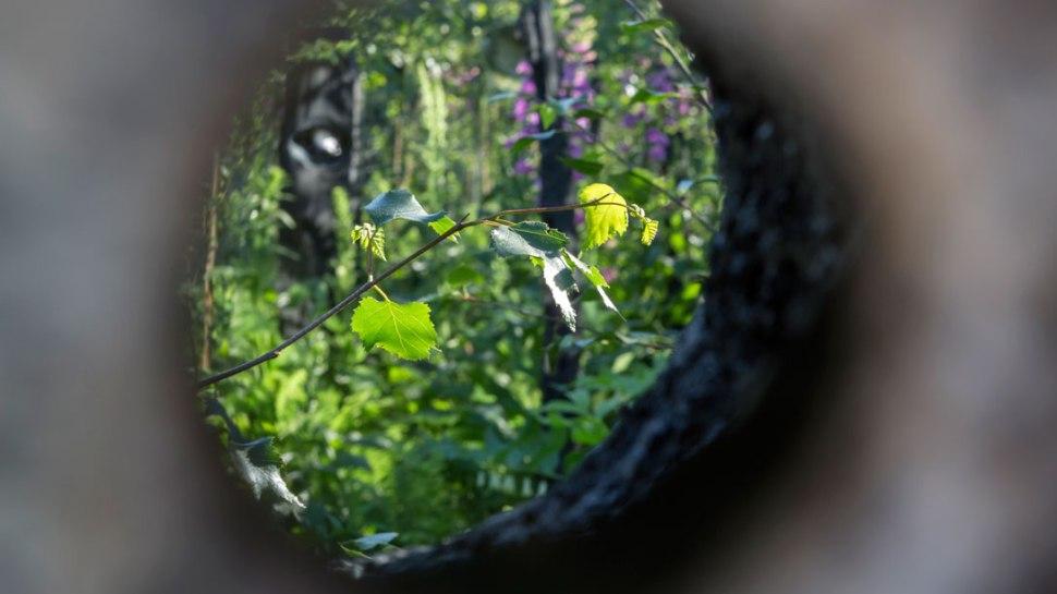 Een kijkje door een van de zes kijkgaten foto: RHS