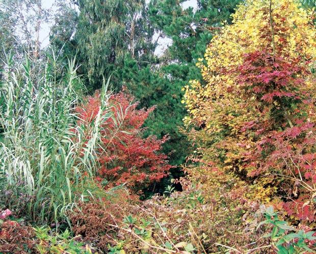 Detail van de 'Woodland Garden'