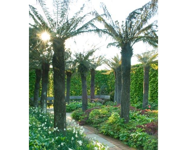 Tree Fern Garden heeft 16 boomvaren in een formeel tuinontwerp
