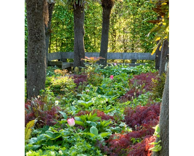 Tree Fern Garden in het vroege voorjaar