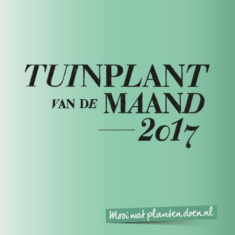 de_tuinplanten_van_2017_zijn_bekend
