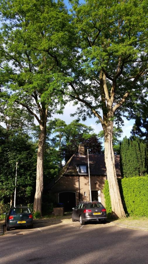 tersteeg-bilderdijkpark-bussum-20140617_194413-kopie