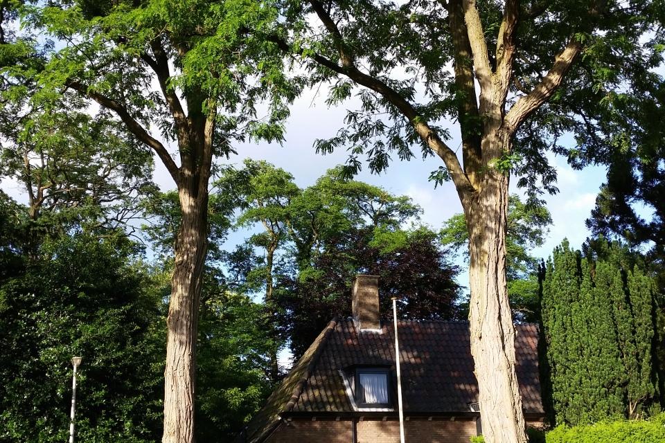 Tersteeg - Bilderdijkstraat Bussum