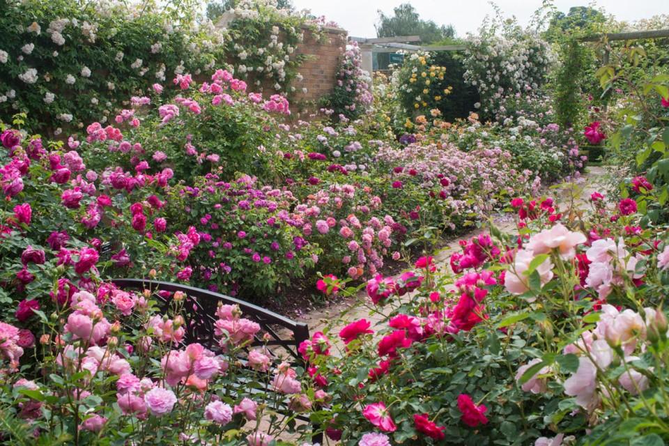 Long garden