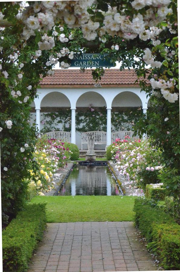 david-austin-renaissance-garden-with-adelaide-dorleans