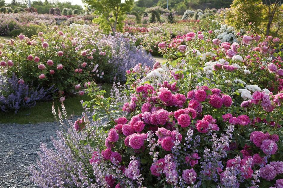 princess-anne-in-dar-garden-osaka-japan-a4