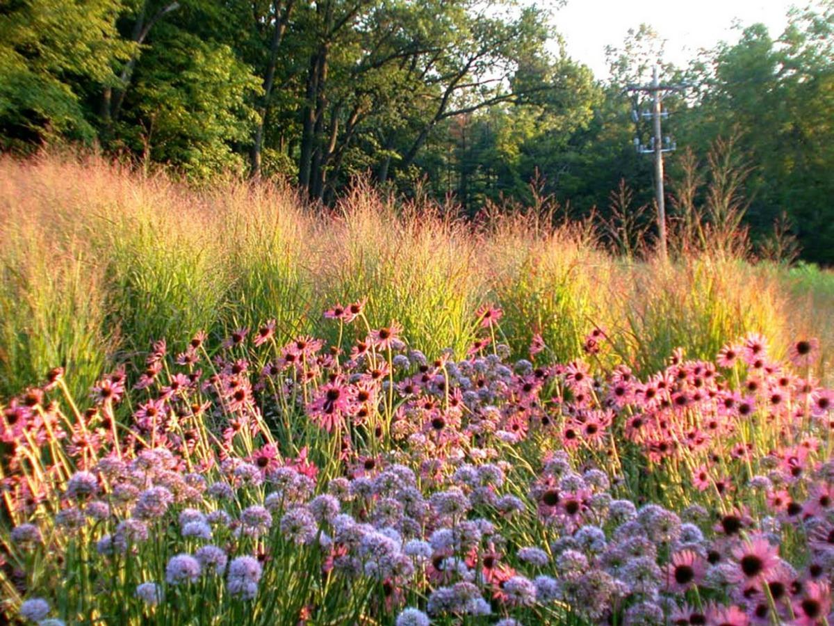 Go wild de favoriete grassen van piet oudolf for Piet oudolf pflanzplan