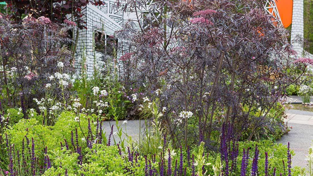 Greening-Grey-Britain_Garden-B21A7281
