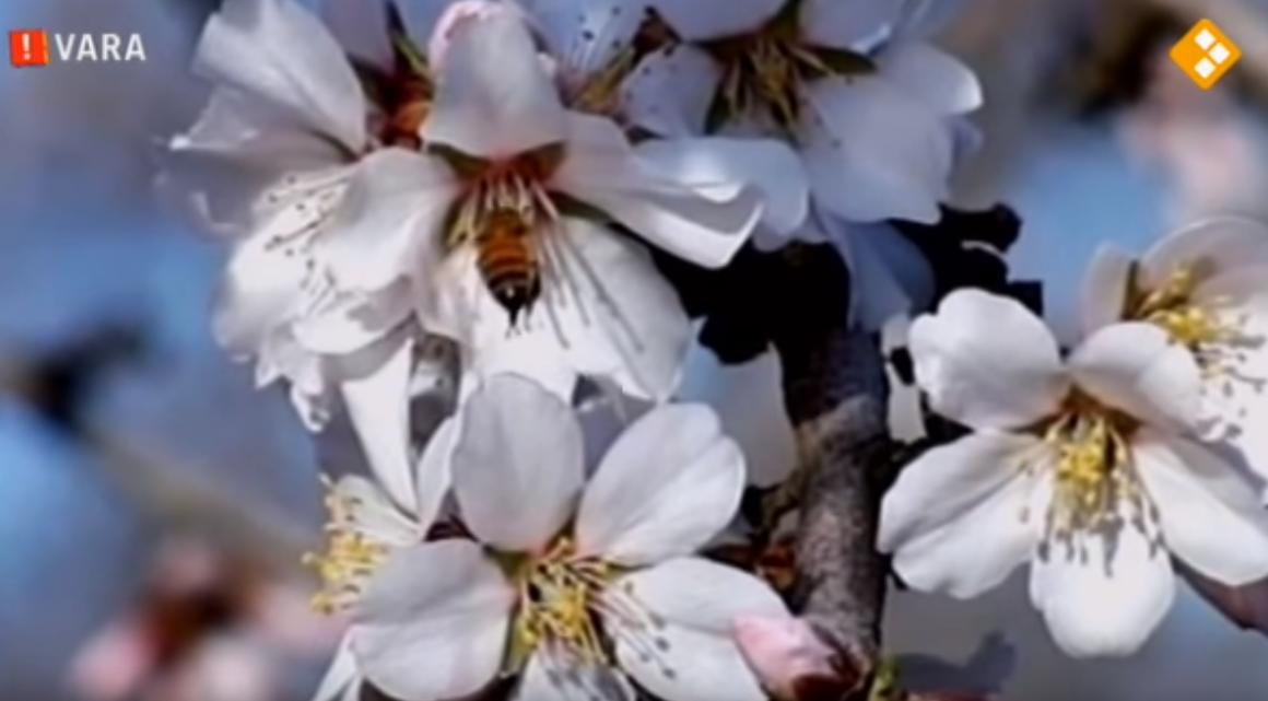 VIDEO – ZEMBLA: Moord op de Honingbij – 2