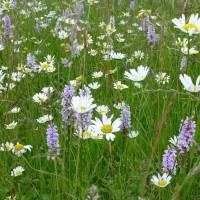 GO WILD! - een bloemrijk grasveld in plaats van een keurig gazon
