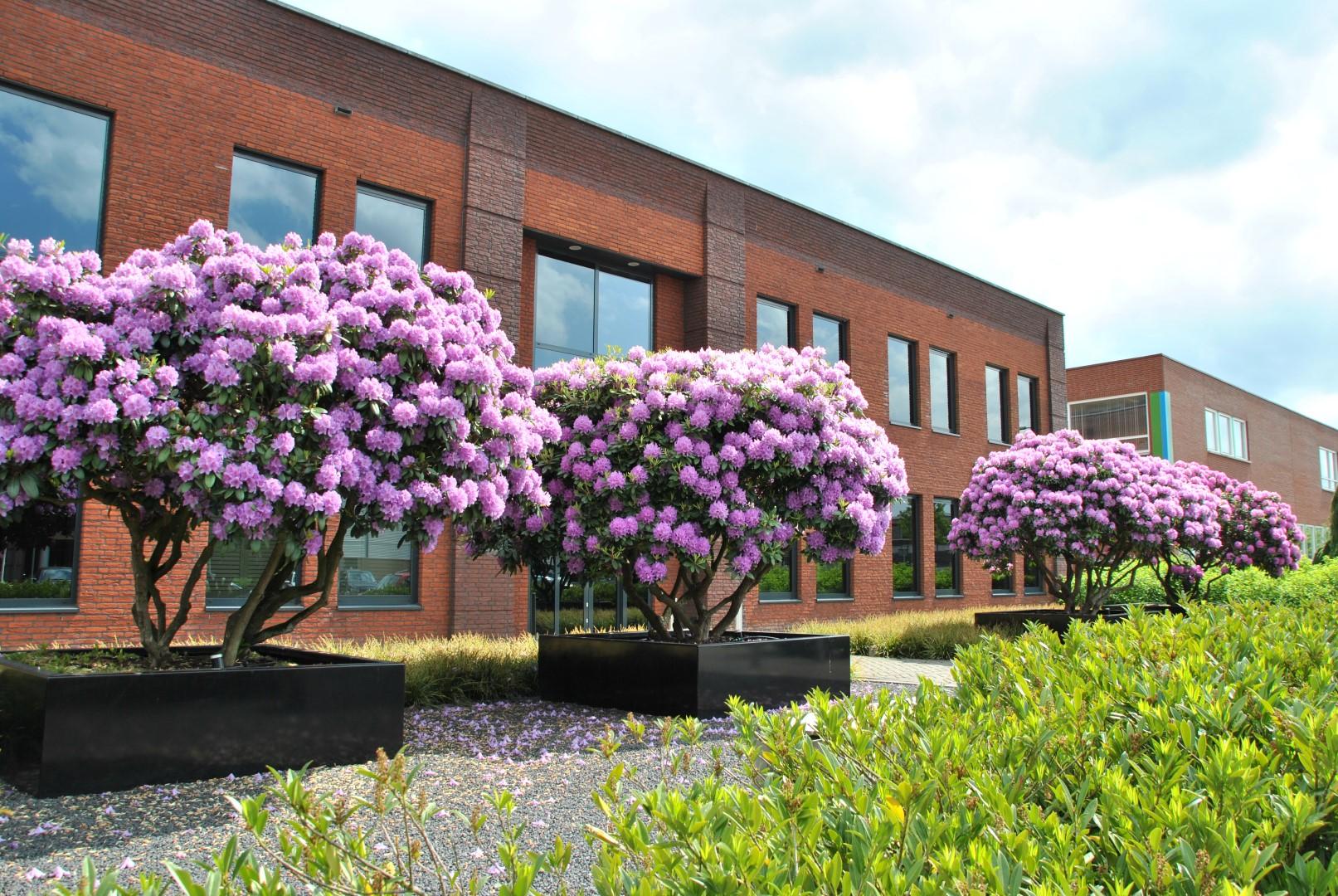 Heester harmonie – De majestueuze rododendrons en azalea's