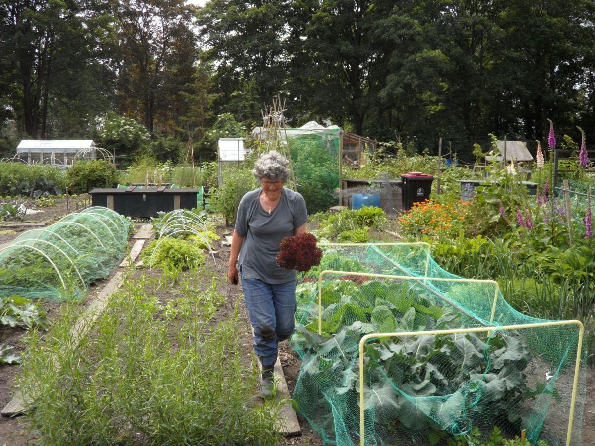 Gids om te tuinieren met een klein budget (1) Eigen tuin of niet