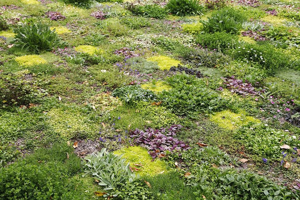 GO WILD! – Gras vervangen door een Bloementapijt