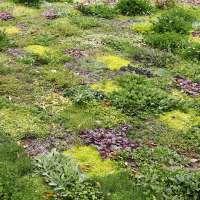 GO WILD! - Gras vervangen door een Bloementapijt
