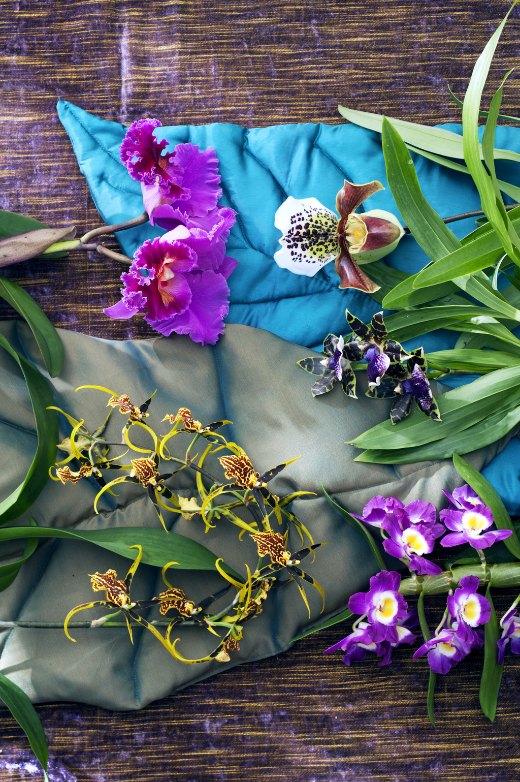 De verzorging van kamerplanten is net zo divers als hun habitat