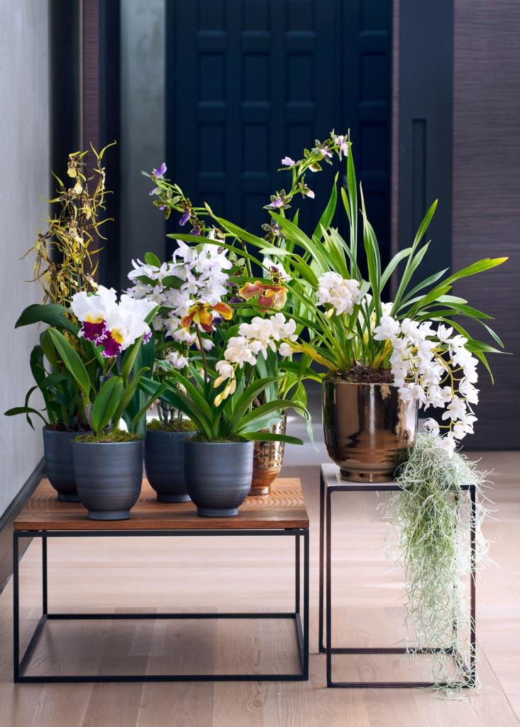 Decoratie Planten Binnen.De Verzorging Van Kamerplanten Is Net Zo Divers Als Hun Habitat