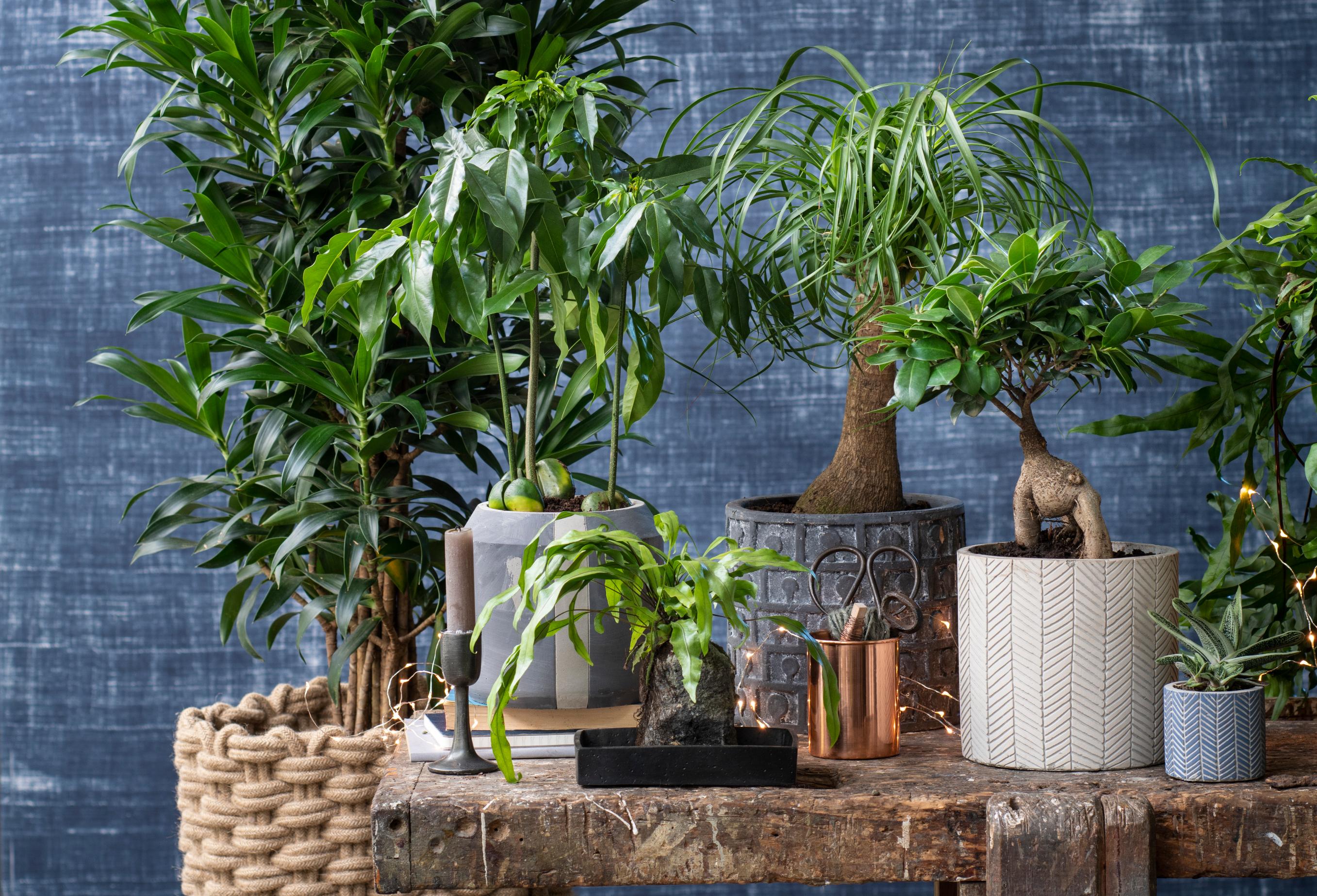 Grote Kamerplanten Intratuin.Nieuwe Stijltrends Binnengroen Groen Groener Groenst