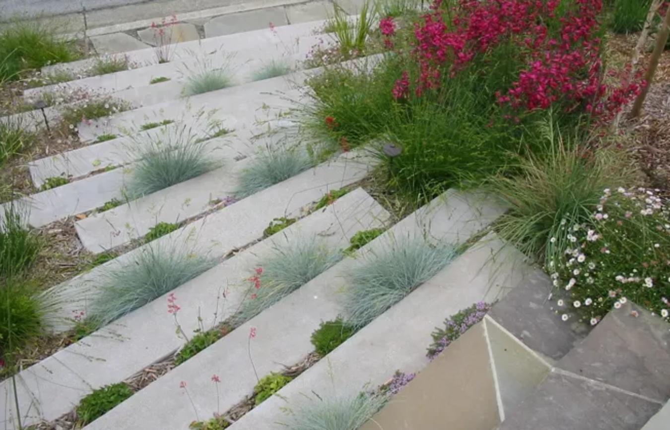Planten op onverwachte plekken in de tuin