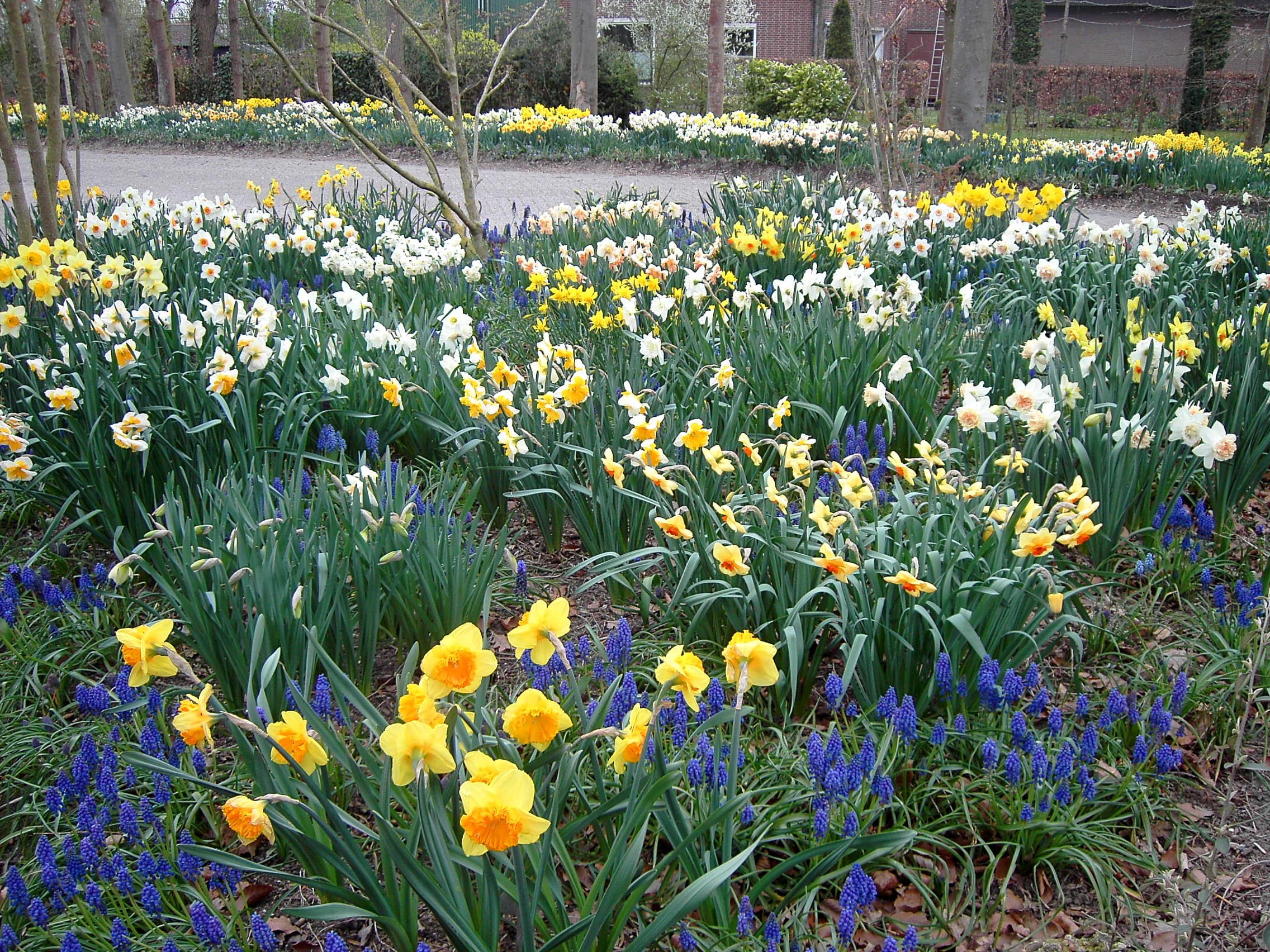 Wies Voesten's Passie voor planten – Voorjaarsbollen