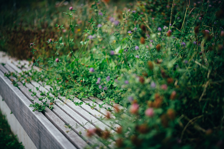 De Discovery Thematuin in de Botanische tuin van Wellington
