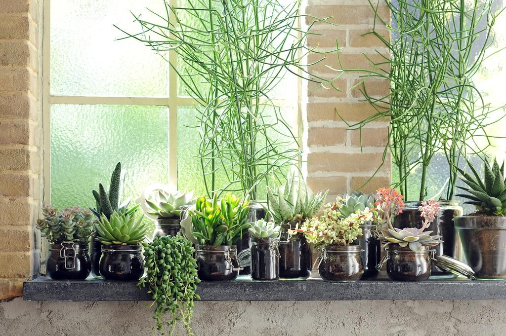 """Kamerplant """"Revival"""" De cactus en vetplant"""