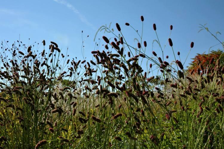 GO WILD! – Planten met een fraai 'Afterlife'