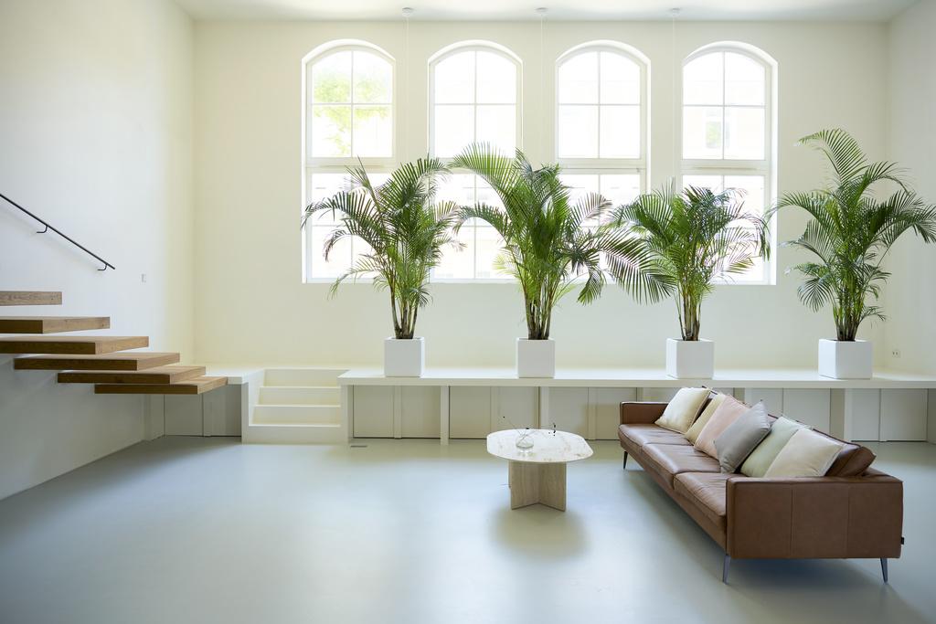 Goudpalm, een kamerplant die niets anders dan rust uitstraalt