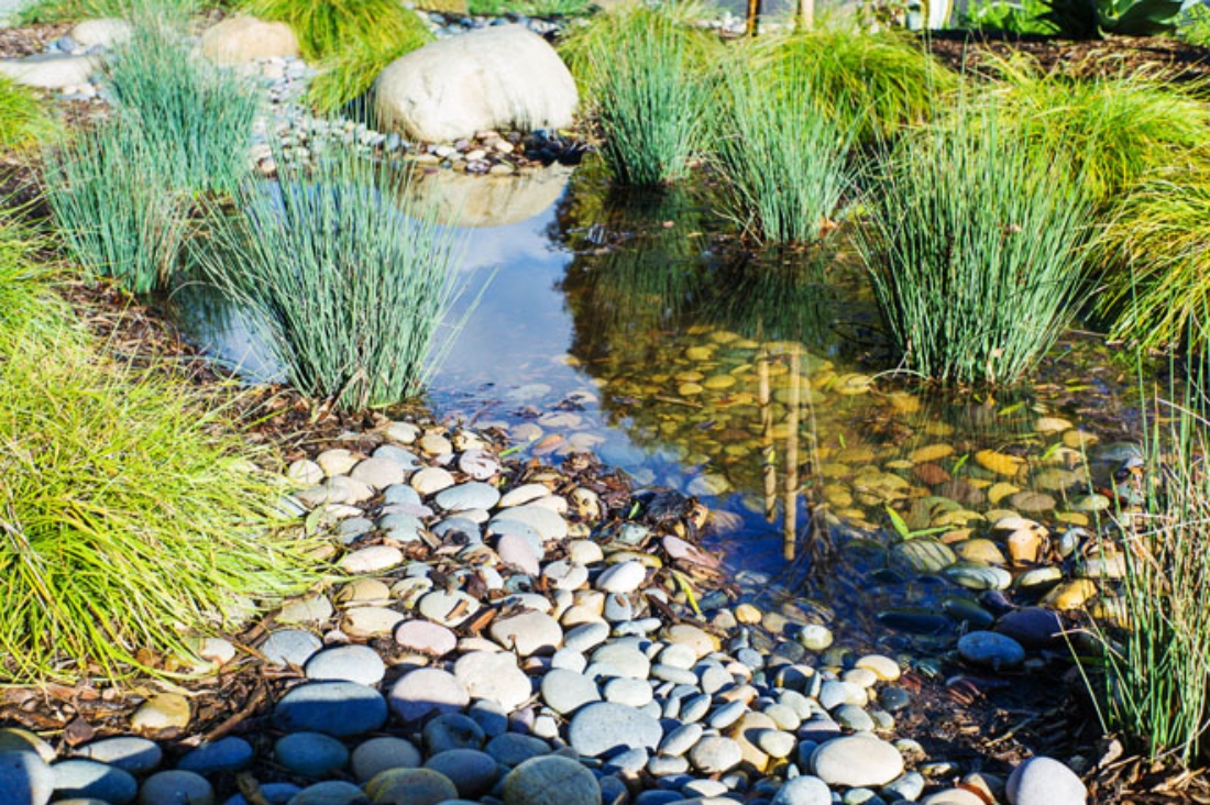 Nieuwe klimaat: nieuwe problemen en nieuwe kansen voor tuiniers